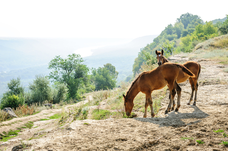 pasturage: Two foals at rural landscape near Alcedar village at river Dniester, Moldova Stock Photo