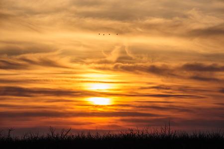 flying storks birds silhouettes on dramatic orange sunset  photo