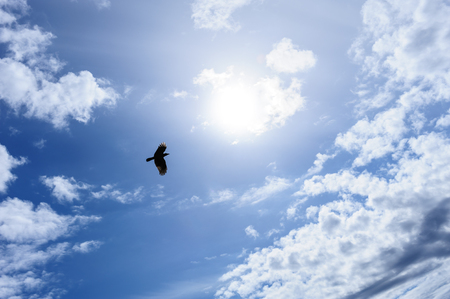 Lonely raven or crow in the blue sky as symbol of freedom photo