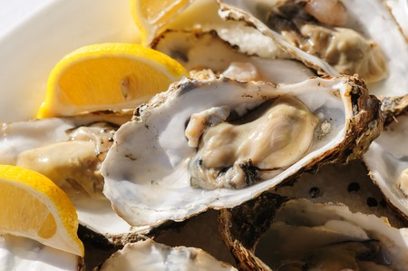 shucked: oysters plate Stock Photo