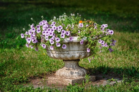 formal garden: flower pot in the park