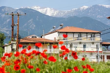 olimpo: Flores rojas de la amapola en el pie de la monta�a Olympus Foto de archivo
