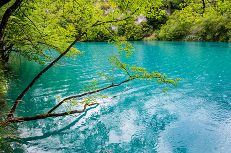 extremely: Extremely clear water of Plitvice Lakes, Croatia. Rainy day.