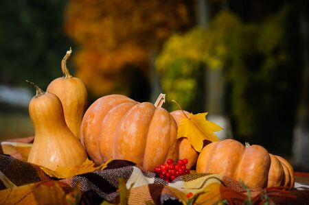 calabaza: Acci�n de gracias oto�o T�pico bodeg�n con la tela escocesa a cuadros, calabazas, bayas rojas y hojas amarillas