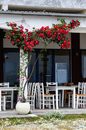 rosebush: Empty mediterranean outdoor cafe with rosebush on the wall Stock Photo
