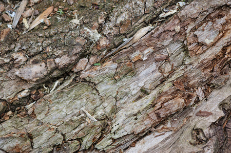 bark background: Detailed tree bark macro background, selective focus