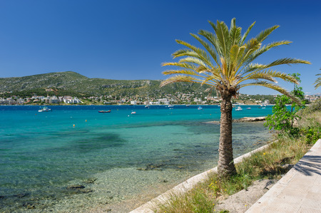 palmtree: Porto Rafti harbor view with palmtree and fisher boats during springtime, Greece Stock Photo