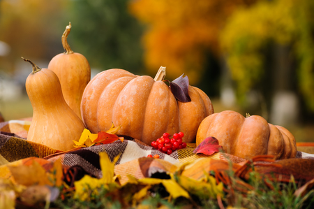 Autumn thanksgiving still life with pumpkins Stock Photo