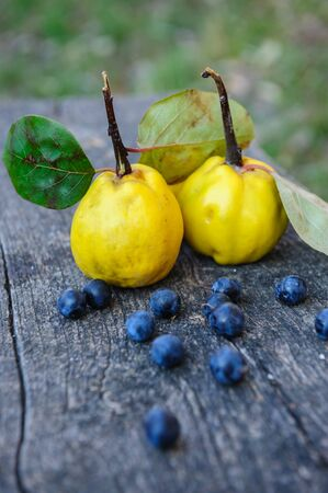 membrillo: Quince fuits and blackthorn berries on old wood background.