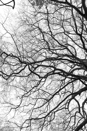 tree branch silhouette on white background