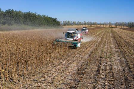 Harvesting of sunflower seeds, aerial view Reklamní fotografie