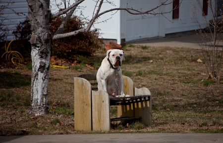 A dog sitting on a bench Imagens