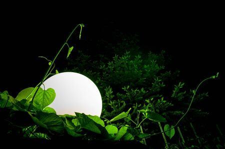 blackness: Big round lantern amidst grass and foliage in the night Stock Photo