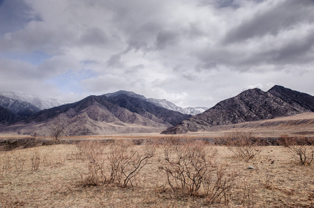 ulagan: Wild valley in Altai in spring