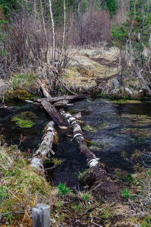 ulagan: Log causeway across a forest creek in Altai Stock Photo