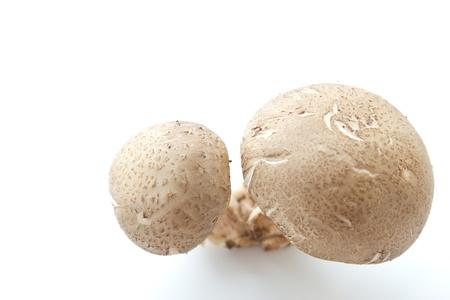 shitake:  Shitake Mushrooms
