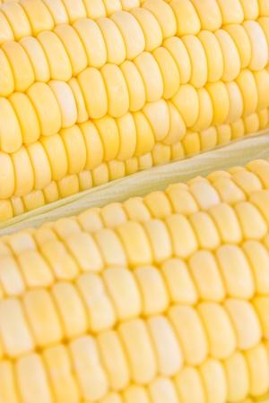 Raw fresh corn photo