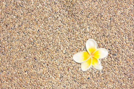 Pebble textured wall with frangipani tile for fine background photo