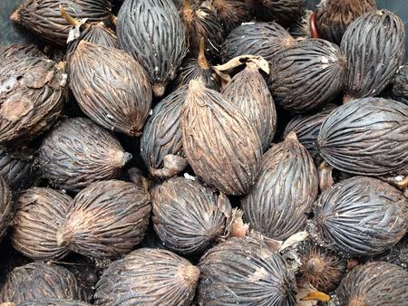 saws: Dried saw palmetto