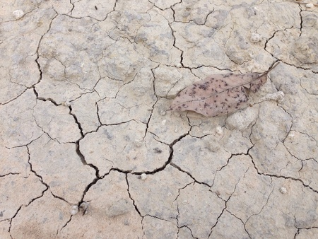 backdrop: Dead leaf on ground crack texture Stock Photo