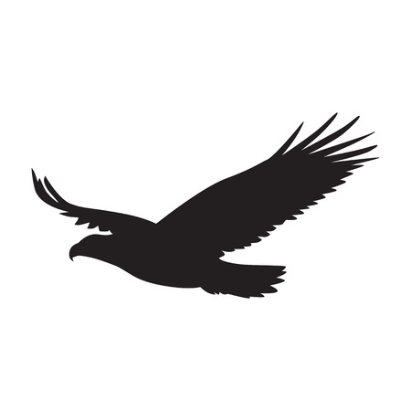 hawks: Vector  silhouette of the Bird of Prey in flight with wings spread