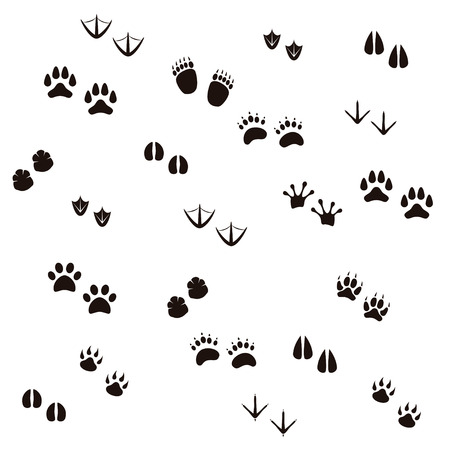 biggest animal: Biggest Set of Animal and Bird Trails Silhouettes. Vector illustration Illustration