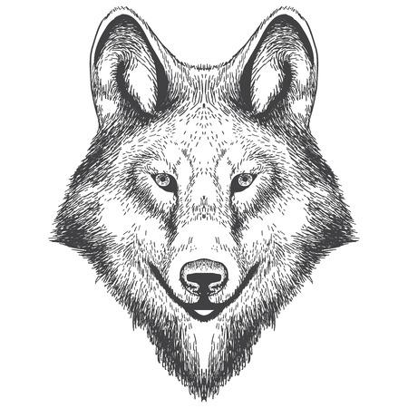 Illustration of wolf head drawning. illustration