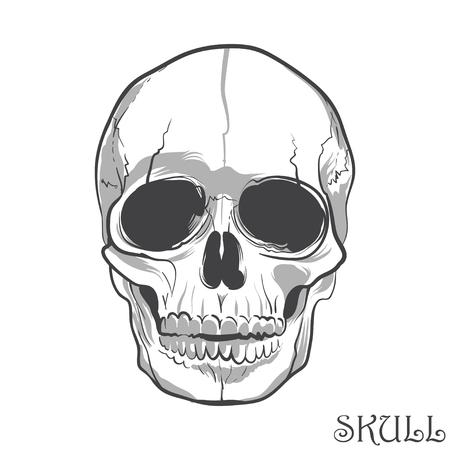 Black and white human skull. Vector illustration Illustration