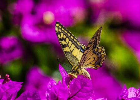 Butterfly feeding on a tree in Croatia