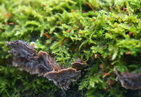 fungal: the moss on the trunk of an old tree in the forest