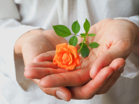A little orange rose on a woman's palm. The concept of women's health. Stock Photo