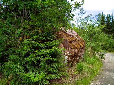 A large boulder covered with moss off a forest road. Northern forest Stock Photo