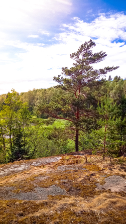 Natural forest with granite boulders. Northern nature, forest on a sunny day with clouds in the sky