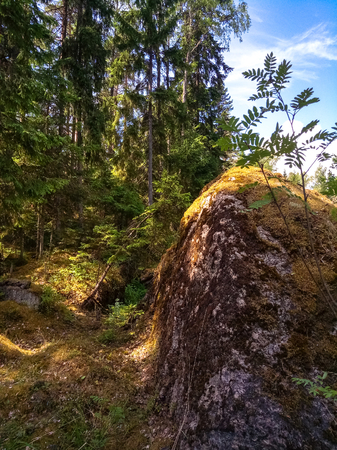 Sunny Scandinavian forest with granite boulders. Mobile photo