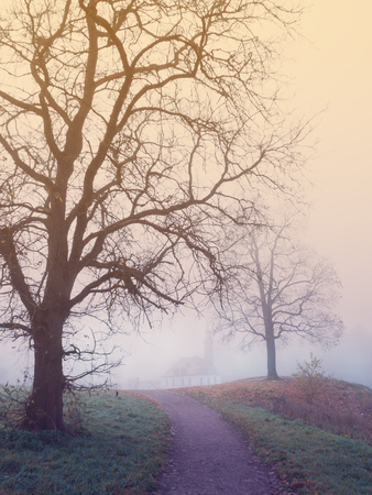 Mystical landscape with tree and fog in autumn Banque d'images
