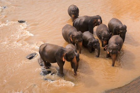 Bathing elephants in the red river