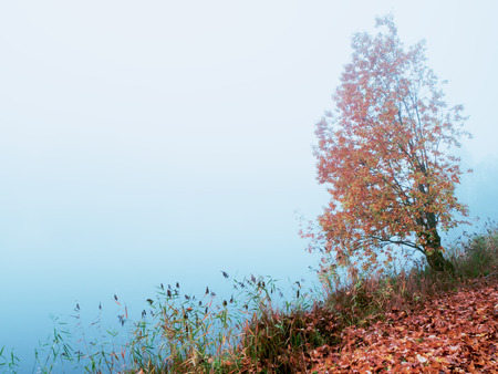 Mystical autumn landscape with fog in the Park Stockfoto
