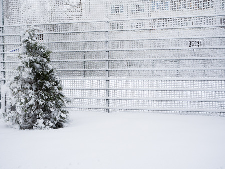 Fence covered with snow. Snow-covered lattice..