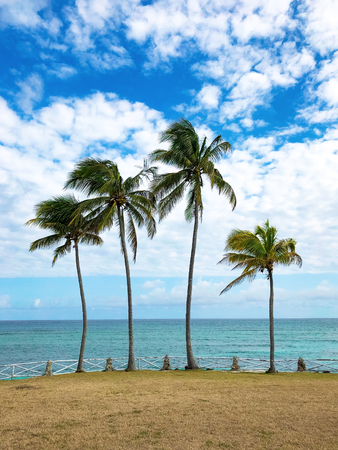 Tropical paradise. Four palm trees on the Caribbean coast. Imagens