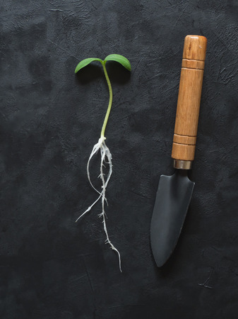 Sprout with roots and garden spatula laid out on a black background.