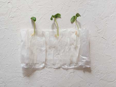 Growing seedlings without ground in paper on a white background.