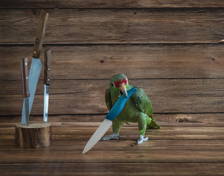 Big green parrot pirate playing with a knife Reklamní fotografie