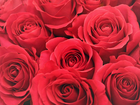 Red roses in a bouquet, close-up. Stock Photo