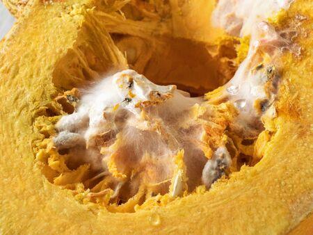 Mold on a pumpkin. The concept of improper storage of vegetables. Imagens