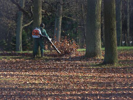 Male worker removes leaf blower lawn of autumn garden.