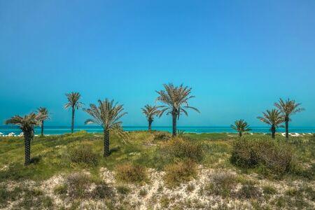 Eco-friendly oasis on the shore of Saadiyat island. Abu Dhabi.