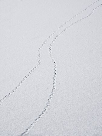 A track of footprints in the snow is a fading perspective. Bird tracks in the snow.