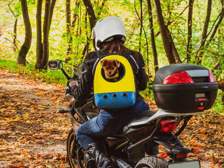 Woman biker on a motorcycle rides along a forest road with a dog in a backpack on his back.
