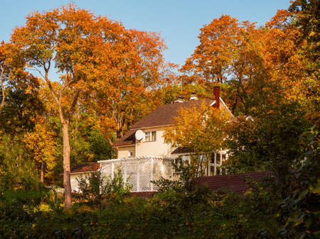 The rural hinterland in the fall. A large tree above the cottage. The concept of happy village life