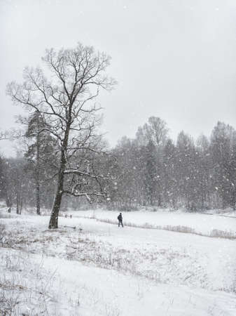 Winter park. Beautiful snow landscape with the figure of a man walking in the Park. Standard-Bild
